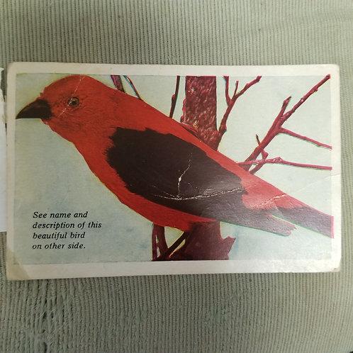 Vintage Postcard Scarlet Tanager, Bird, 1915-1930, Color