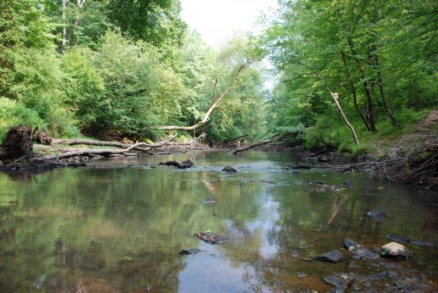 Medoc Spring Creek