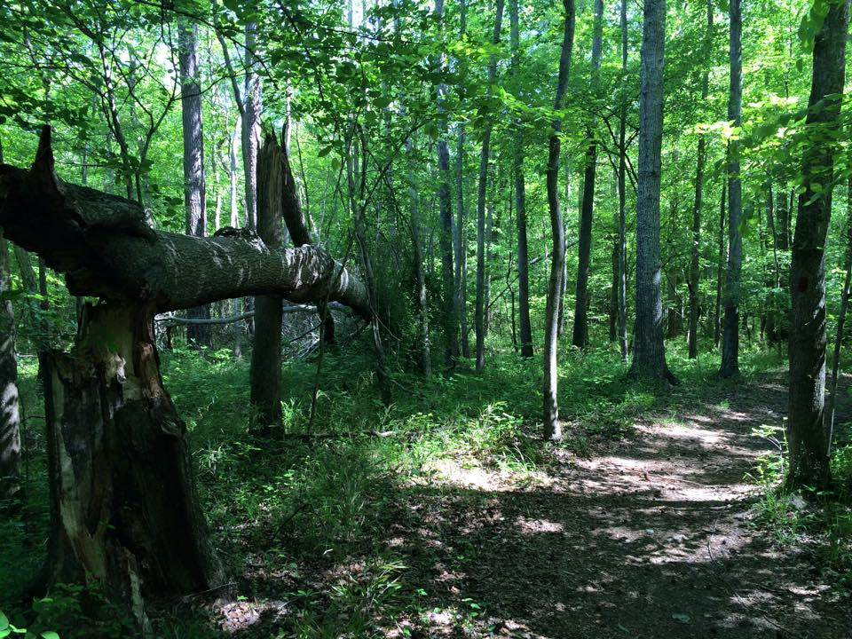 Trail Tree