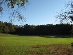 Medoc Sunny Field 2