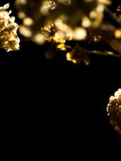 Dead Flowers Lousiana.jpg