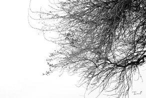 Bleak Branches
