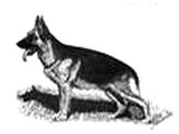 German-Shepherd-Dog.jpg