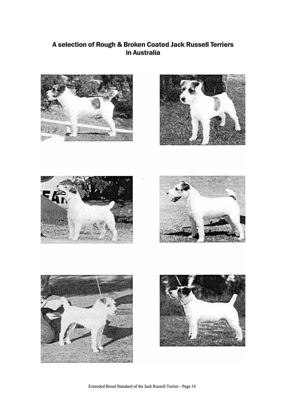 liTnni-Extended_Breed_Standard14.jpg