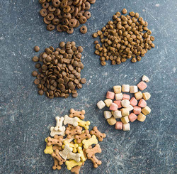 different-dog-foods-PFGQFKU
