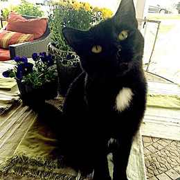 Hello my black beauty.