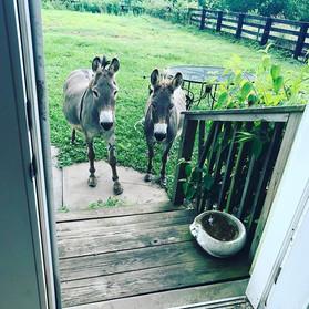 Good morning Donkey's