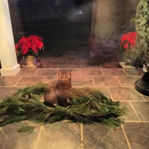 My holiday cheer.