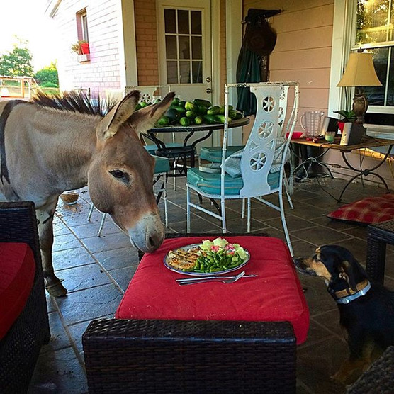 Just a dog and a donkey sharing dinner. totally normal around here.