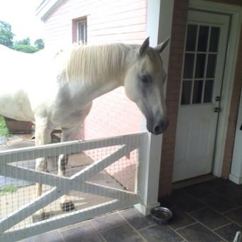 She was my Pegasus