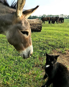 Unlikely friendships abound