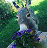 Always taking time to smell and sometimes eat the flowers.