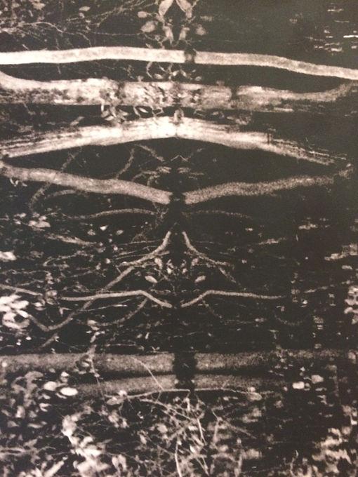 Rio Negro (detail)