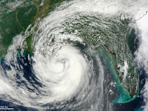 The Impact of Hurricane Harvey & Irma on the Global Seafood Industry