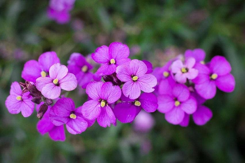 purple-flowers-design.jpg