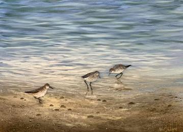 sandpiper-beach.jpeg