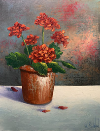 potted-geraniums.jpeg