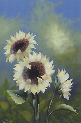 """""""Golden Sunflowers"""" Packet"""