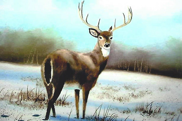 """Whitetail Buck"" Painting Packet"
