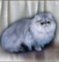Tamosah Blue Pewter Persian