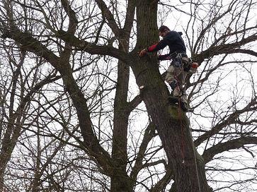 Prořezávání stromu