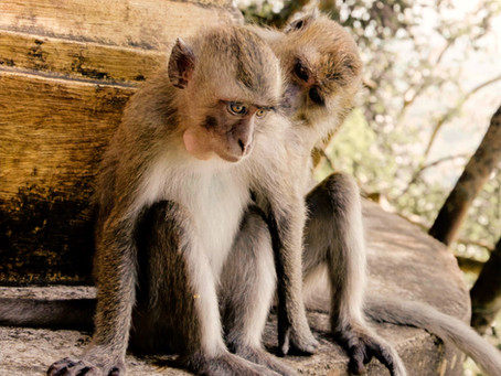 Der Affengeist
