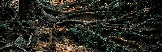 brown_tree_trunk_on_brown_soil-scopio-36
