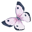 Papillon Aquarelle 5