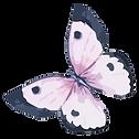 Aquarell-Schmetterling 5
