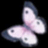 Akvarel motýl 5
