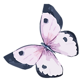 Aquarel Butterfly 5