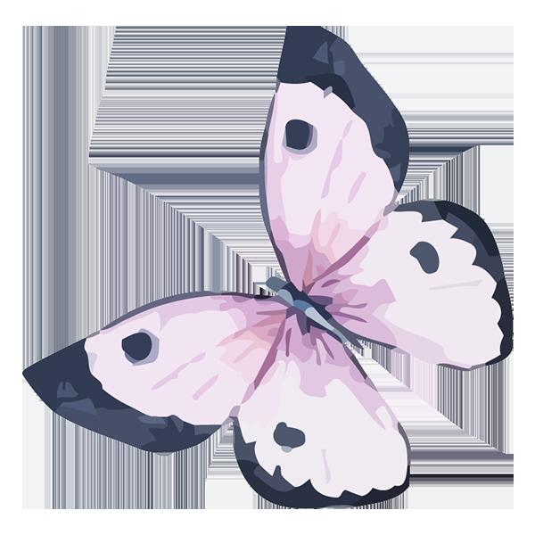 Effet papillon - fournisseurs