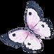 水彩蝴蝶5