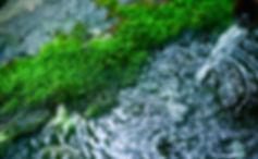 湧き水の写真.jpg