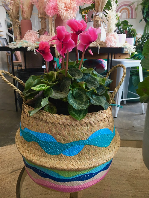 Mothers Day Special Basket & Plant