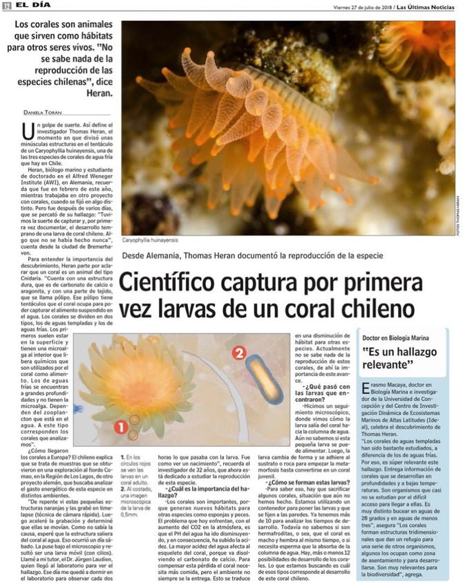 Científico captura por primera vez larvas de un coral Chileno