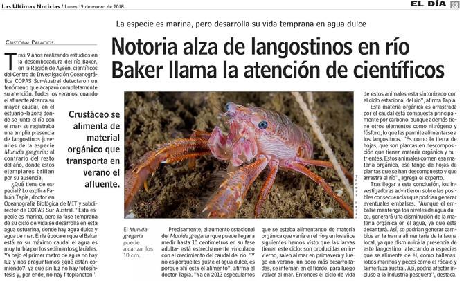"""""""Munida gregaria"""", una especie clave en los ecosistemas de fiordos."""