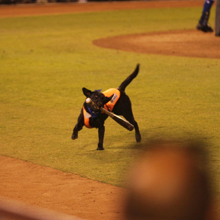 Finn the Bat Dog