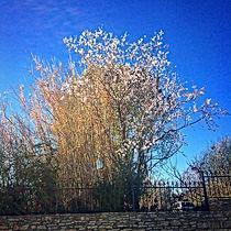 Et voilà le printemps !