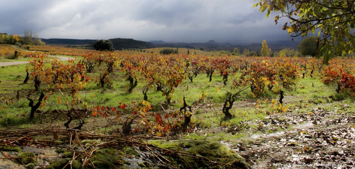 Rioja province
