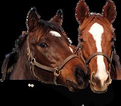 horses head.png