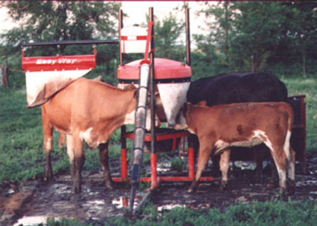 Easy Way Cattle Care.jpg