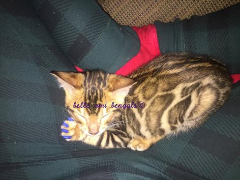 Floki sleeping cat .jpg