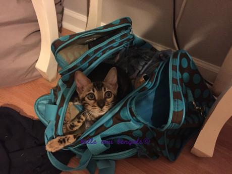 cat in a bag.jpg
