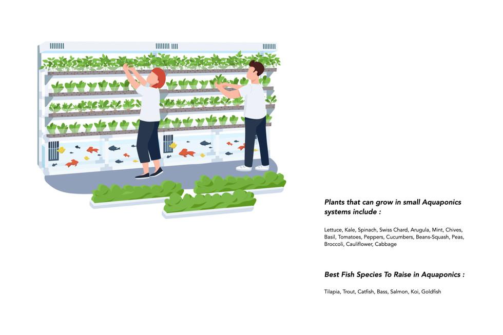 Aquaponics pics.003.jpeg