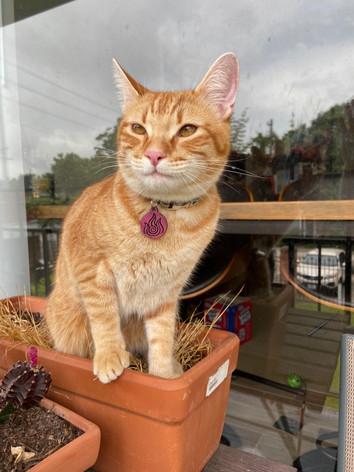 Firebender Kitty