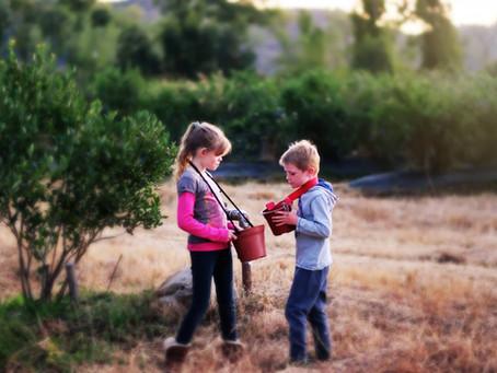 Raising Kids on an Organic Farm
