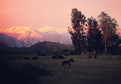 Another beautiful evening! #maule #farml