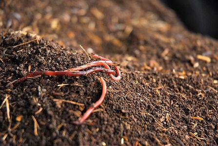 Worms, Makemake Farm