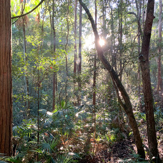 Early morning in the forest at Narara Eco Village